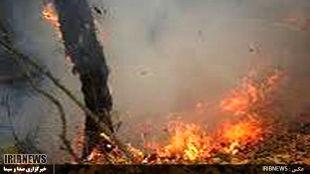 آتش سوزی در 50 هکتار از ارتفاعات وِزکور بخش کوهنانی