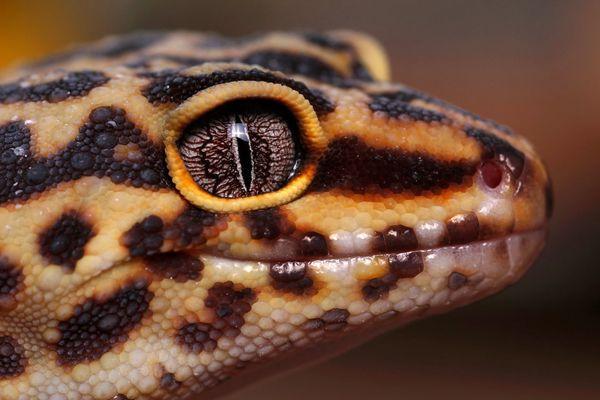 تصاویر /  طبیعت موجودات کوچک و بزرگ از دریچه دوربین عکاسان