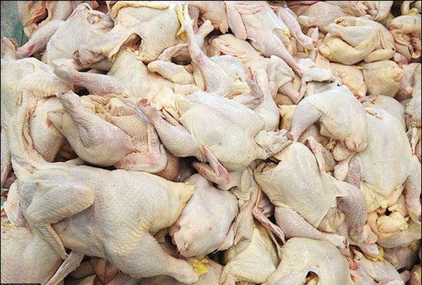 قیمت مرغ ارزان میشود؟+فیلم وجدول