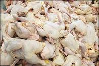 قیمت مرغ دربازار امروز چقدر گران شد؟+جزئیات کامل