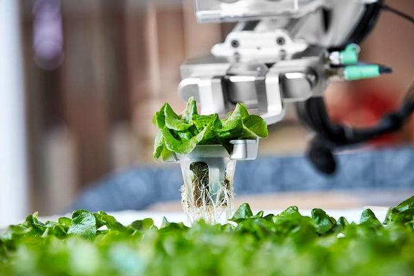 نخستین مزرعه رباتیک آمریکا/ پرورش سبزیجات به صورت هوشمند