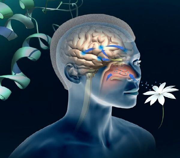 یک تست جدید برای  تشخیص آلزایمر