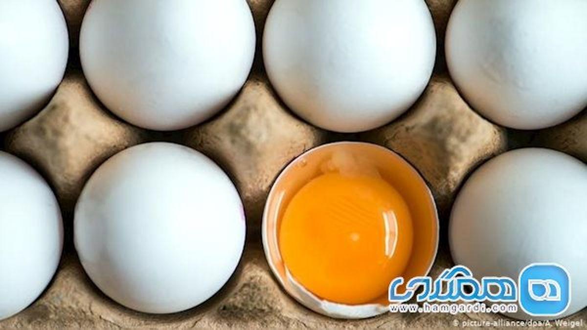 تخم مرغ بال در آورد!