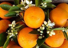 """با خواص """"نارنج"""" آشنا شوید"""