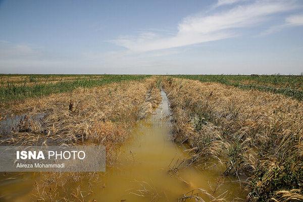 وضعیت بد در پرداخت غرامت سیل به کشاورزان؛ دو بانک بدون هیچ پرداختی