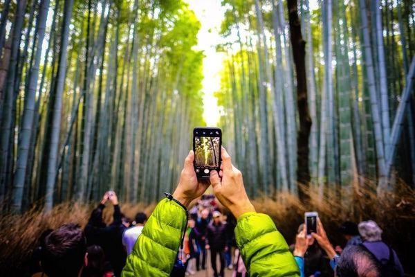 عکس/ سلفی در میان بامبوها در عکس روز نشنال جئوگرافیک